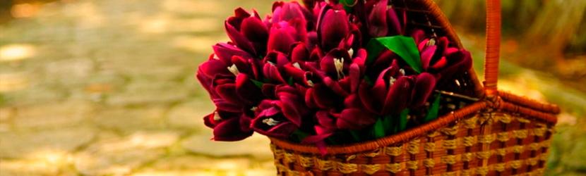 Cestas de Flores