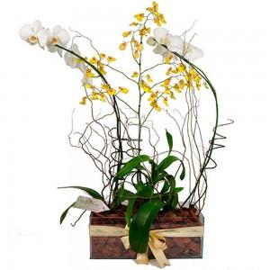 Arranjo Combinado de Orquídeas Luxo