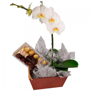 Orquídea Phalaenopsis com Bombons Uniflores