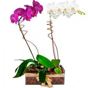 Arranjo de flores Combinado Nobre de Orquídeas Uniflores