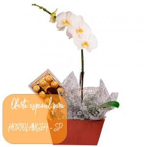 Orquídea Phalaenopsis com Bombons