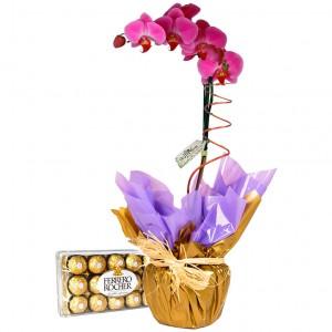 Orquídea Phalaenopsis lilás com chocolates