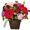 Flores Beleza da Primavera