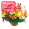 Oferta de flores especial para Campos dos Goytacazes: Cesta de Flores do Campo