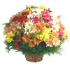 Oferta de flores especial para Armação dos Búzios: Cesta de Flores do Campo