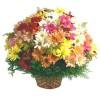 Oferta de flores especial para Paulínia: Cesta de Flores do Campo