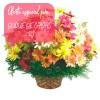 Oferta de flores especial para Duque de Caxias: Cesta de Flores do Campo
