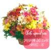 Oferta de flores especial para Jaboatão dos Guararapes: Cesta de Flores do Campo