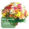Oferta de flores especial para Limeira: Cesta de Flores do Campo