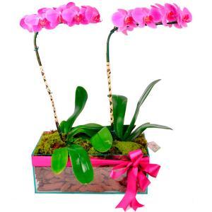 Arranjo Nobre de Orquídeas Lilases