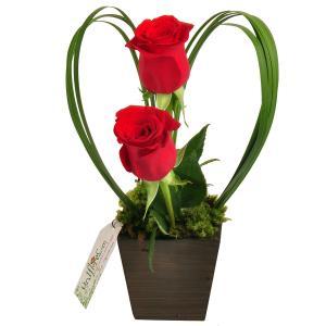 Encanto de Rosas Vermelhas