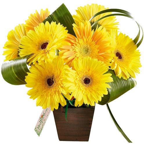 Arranjo de Flores Você é Luz