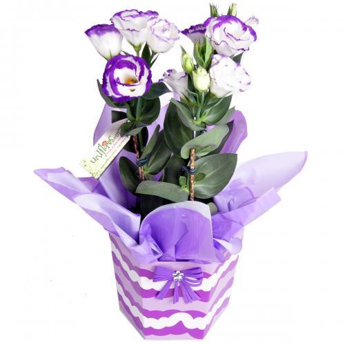 Arranjo Flores Lisianthus