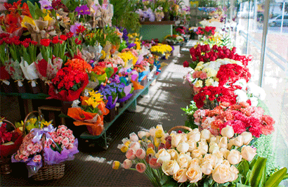 Aniversário de São Paulo - Flores