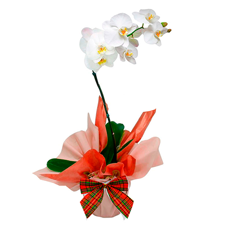 Orquídea para o Natal